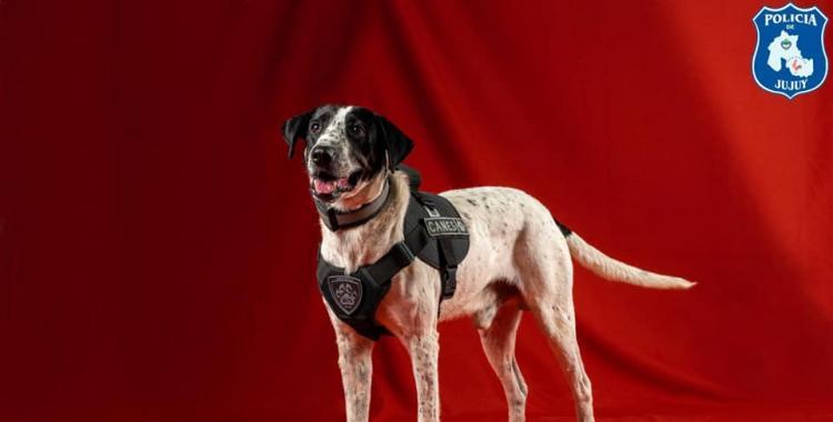 Insólito: La Policía presentó sus perros antinarcóticos y uno de los canes se llama Falopa | El Diario 24