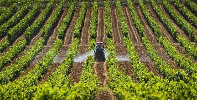 Por qué el 8 de septiembre es el día del Agricultor y del Productor Agropecuario   El Diario 24