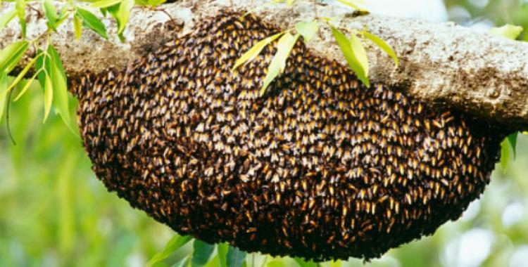 Un hombre murió por el ataque de abejas y un compañero está internado en grave estado | El Diario 24